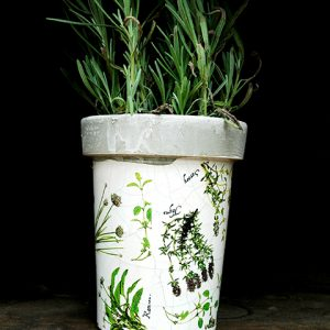Herb Printed Pot