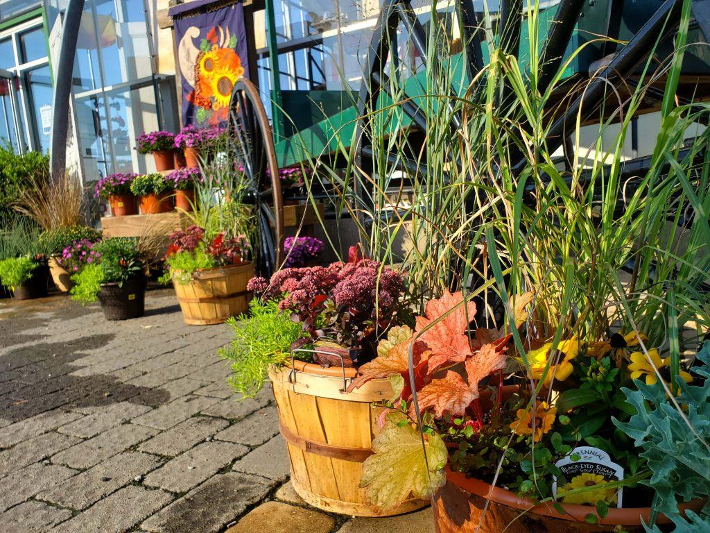 Fall combo planters